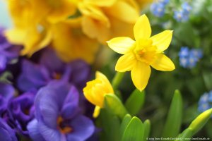 spring_flowers_by_icehand84-d602i0f